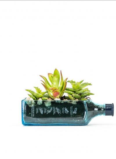 Maceta hecha con botella